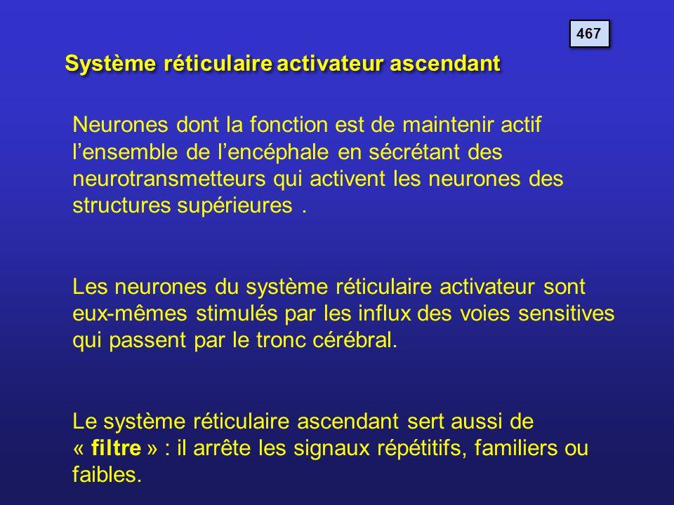 Système réticulaire activateur ascendant 467 Neurones dont la fonction est de maintenir actif lensemble de lencéphale en sécrétant des neurotransmette