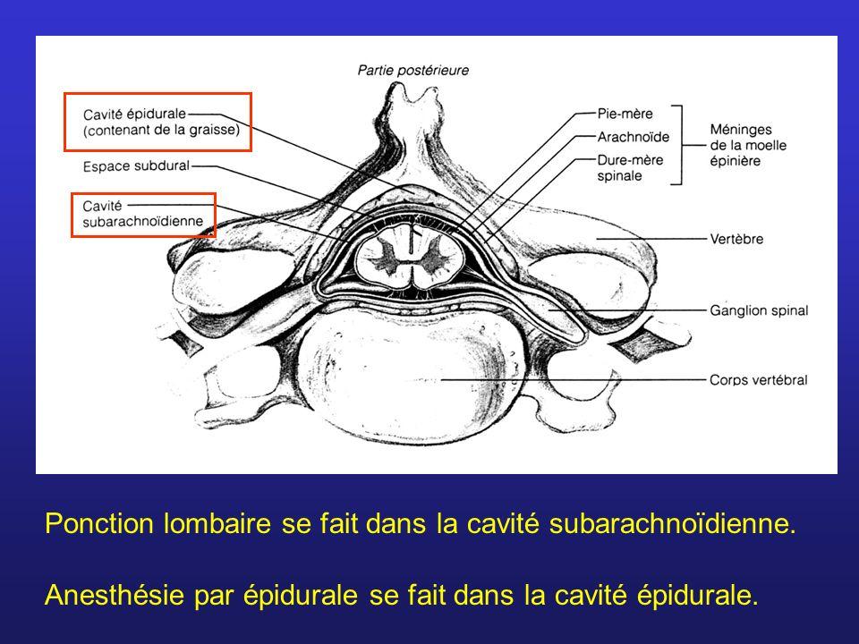 Ponction lombaire se fait dans la cavité subarachnoïdienne. Anesthésie par épidurale se fait dans la cavité épidurale.