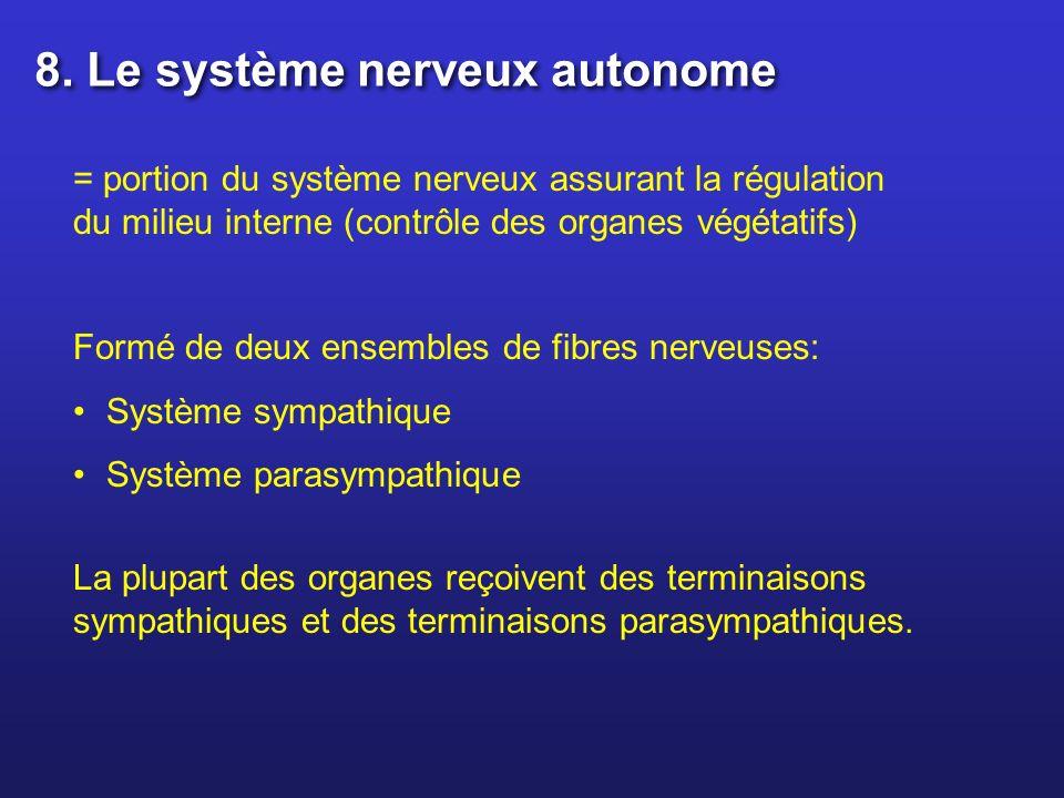 = portion du système nerveux assurant la régulation du milieu interne (contrôle des organes végétatifs) Formé de deux ensembles de fibres nerveuses: S