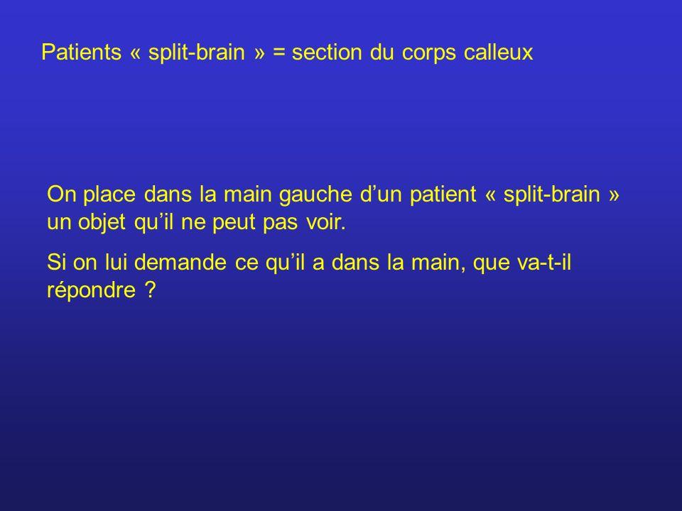 Patients « split-brain » = section du corps calleux On place dans la main gauche dun patient « split-brain » un objet quil ne peut pas voir. Si on lui