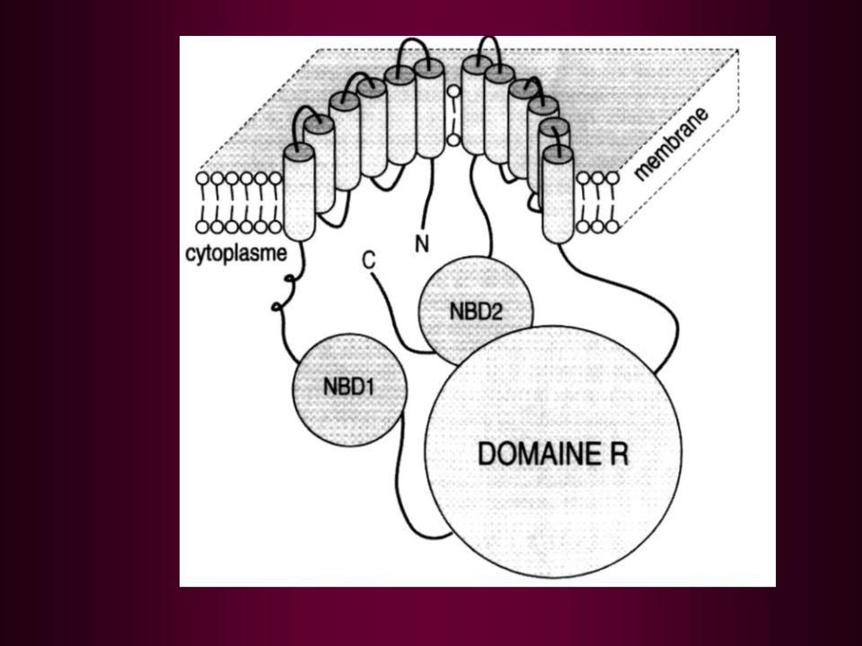 CRCM-LR en pratique Dépistage + (GREPAM : TIR + Bio mol) Confirmation CRCM (test de la sueur) Suivi CRCM CS mensuelles (6 mois à 1 an) puis trimestrielles Mise en œuvre et suivi du TTT par le réseau Bilan annuel CRCM