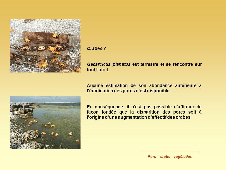 Crabes ? Gecarcicus planatus est terrestre et se rencontre sur tout latoll. Aucune estimation de son abondance antérieure à l'éradication des porcs n'