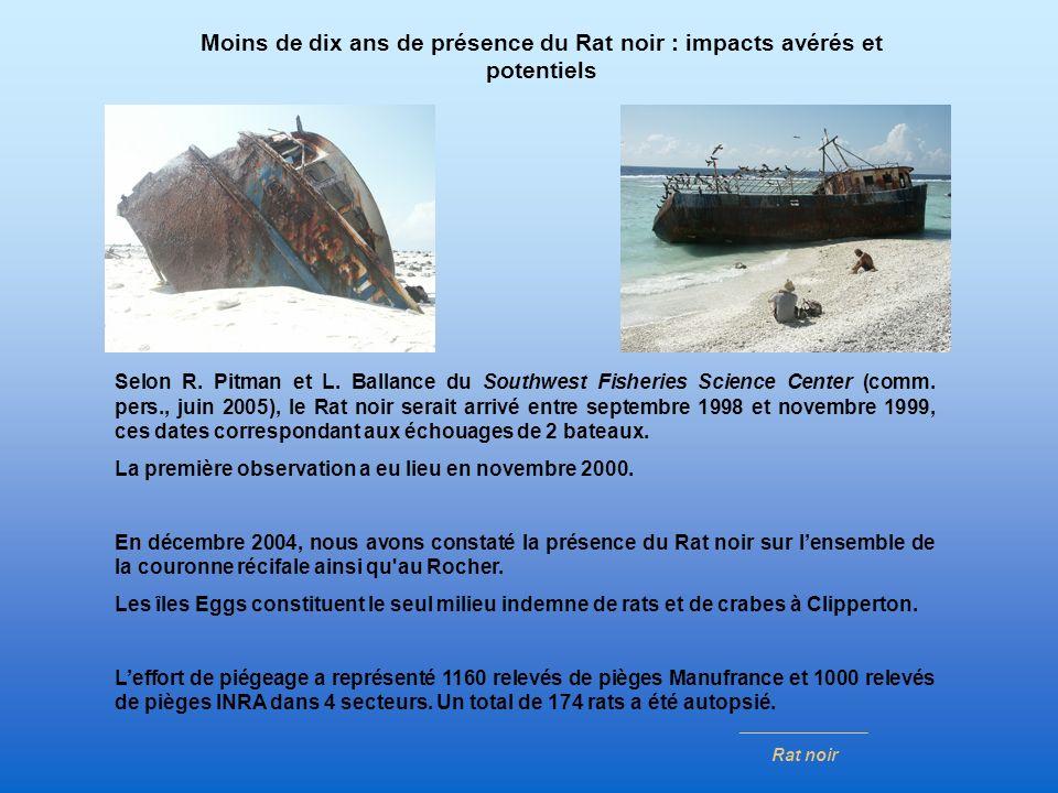Selon R. Pitman et L. Ballance du Southwest Fisheries Science Center (comm. pers., juin 2005), le Rat noir serait arrivé entre septembre 1998 et novem