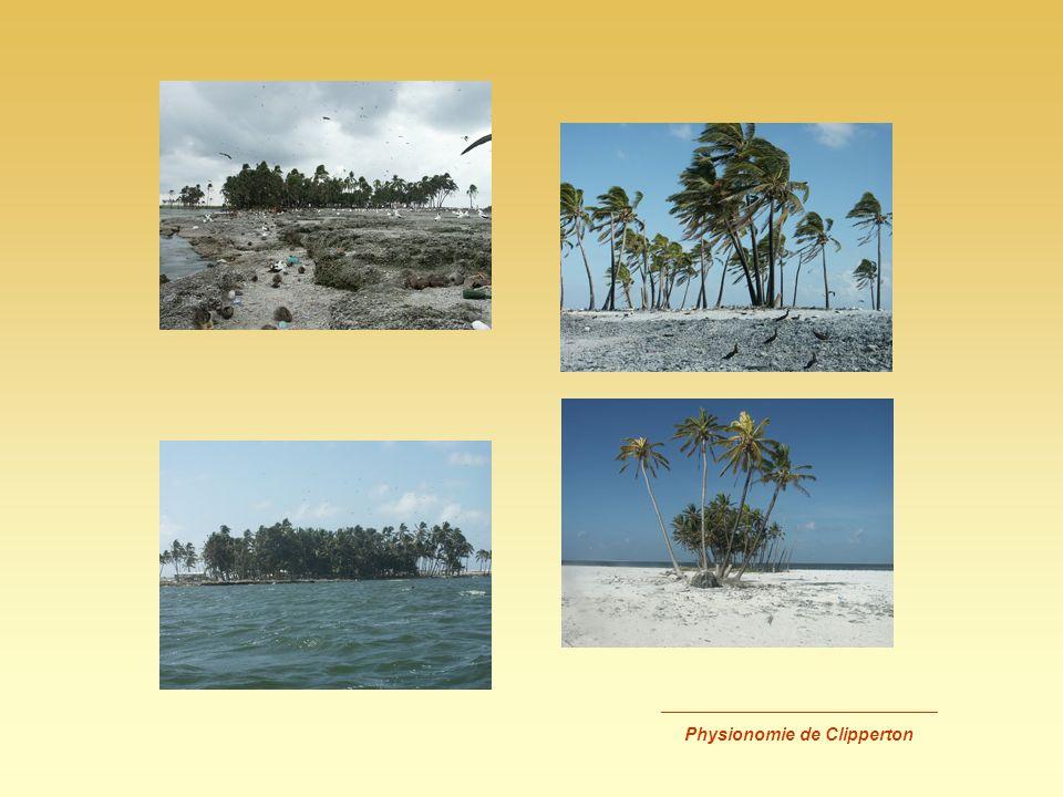 _________________________ Inventaire des vertébrés Fregatidae : Fregata minor (Frégate du Pacifique)