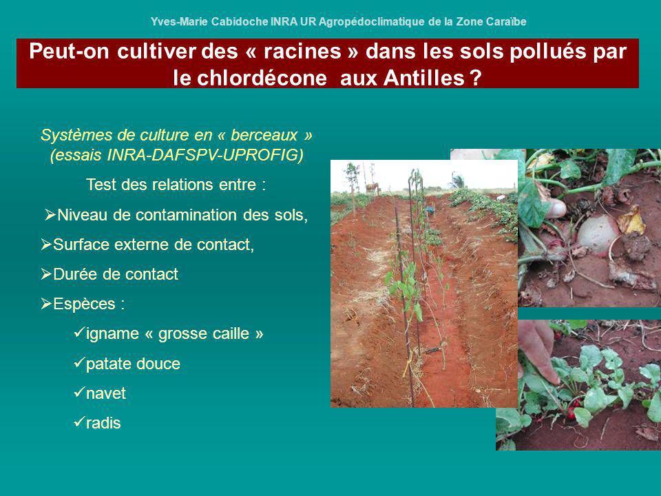 Yves-Marie Cabidoche INRA UR Agropédoclimatique de la Zone Caraïbe Systèmes de culture en « berceaux » (essais INRA-DAFSPV-UPROFIG) Test des relations