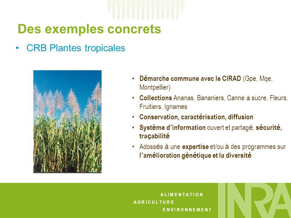 A L I M E N T A T I O N A G R I C U L T U R E E N V I R O N N E M E N T CRB Plantes tropicales D é marche commune avec le CIRAD (Gpe, Mqe, Montpellier