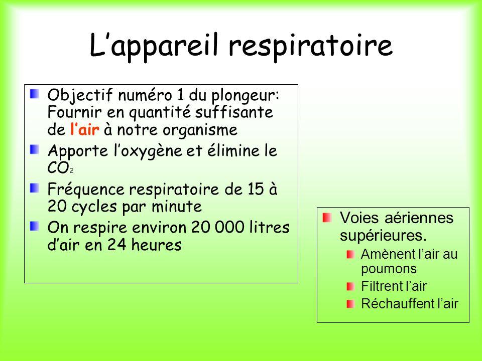 Lappareil respiratoire Objectif numéro 1 du plongeur: Fournir en quantité suffisante de lair à notre organisme Apporte loxygène et élimine le CO 2 Fré