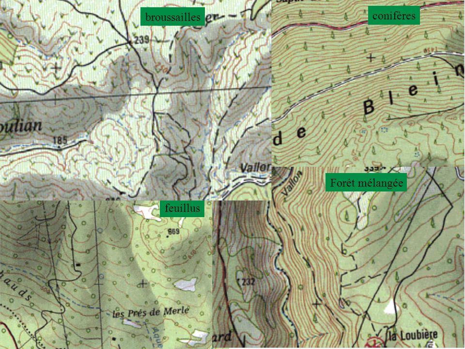 conifères feuillus Forêt mélangée broussailles