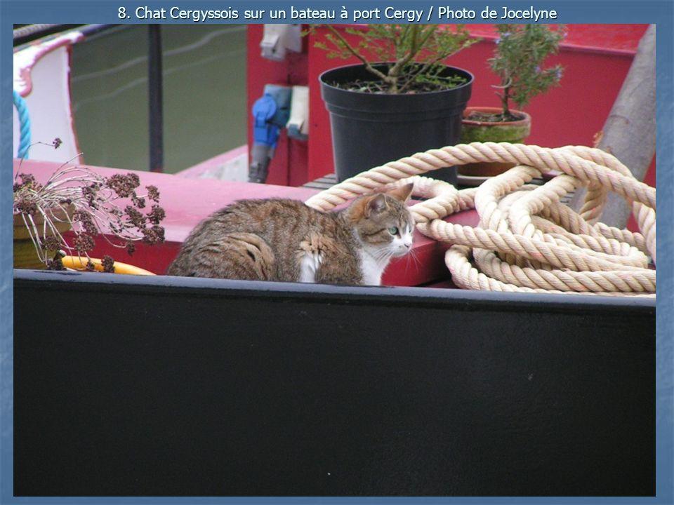 8. Chat Cergyssois sur un bateau à port Cergy / Photo de Jocelyne