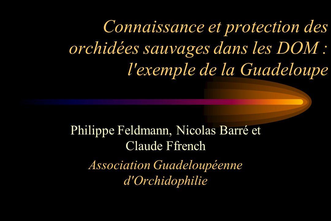 Connaissance et protection des orchidées sauvages dans les DOM : l'exemple de la Guadeloupe Philippe Feldmann, Nicolas Barré et Claude Ffrench Associa