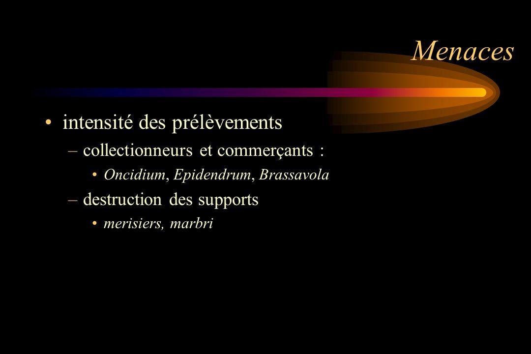 Menaces intensité des prélèvements –collectionneurs et commerçants : Oncidium, Epidendrum, Brassavola –destruction des supports merisiers, marbri