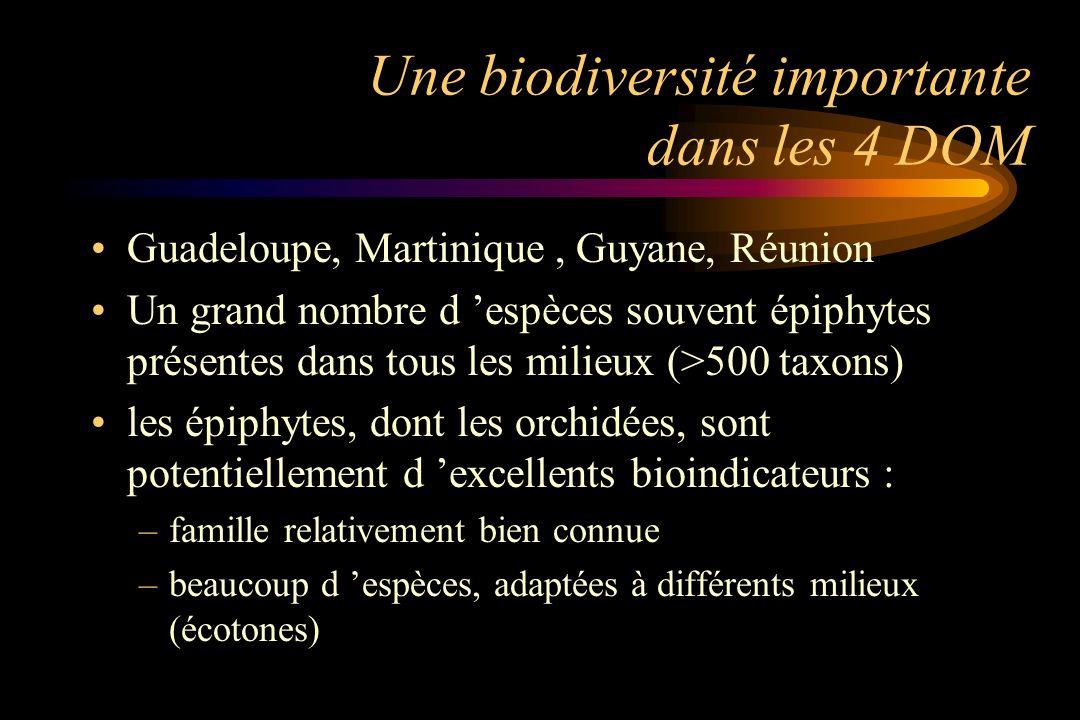 Une biodiversité importante dans les 4 DOM Guadeloupe, Martinique, Guyane, Réunion Un grand nombre d espèces souvent épiphytes présentes dans tous les