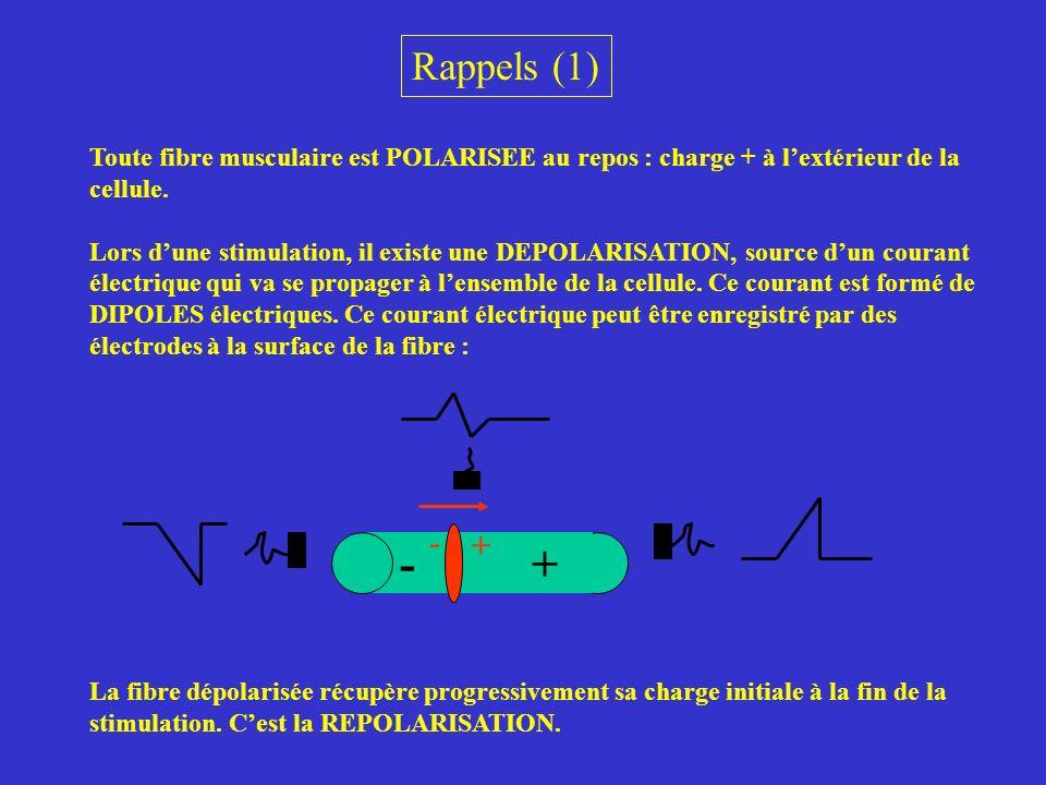 Rappels (1) Toute fibre musculaire est POLARISEE au repos : charge + à lextérieur de la cellule. Lors dune stimulation, il existe une DEPOLARISATION,