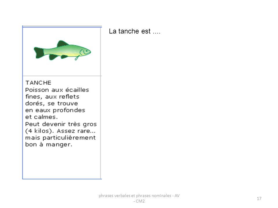 phrases verbales et phrases nominales - AV - CM2 17 La tanche est....