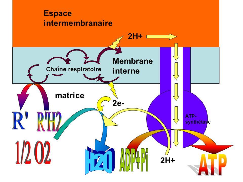 matrice Espace intermembranaire Membrane interne Chaîne respiratoire 2e- 2H+ ATP- synthétase 2H+