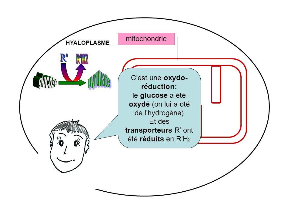mitochondrie MATRICE HYALOPLASME Cest une oxydo- réduction: le glucose a été oxydé (on lui a oté de lhydrogène) Et des transporteurs R ont été réduits