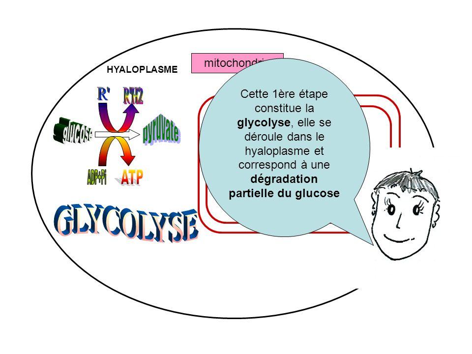 mitochondrie MATRICE HYALOPLASME Cette 1ère étape constitue la glycolyse, elle se déroule dans le hyaloplasme et correspond à une dégradation partiell
