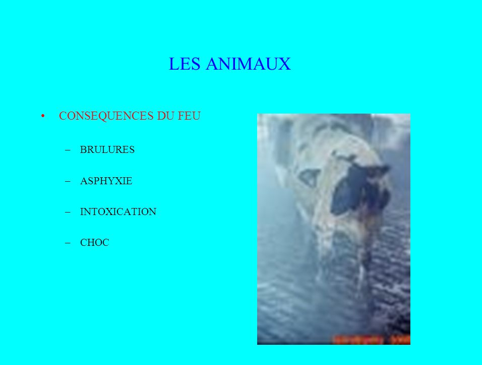 LES ANIMAUX CONSEQUENCES DU FEU –BRULURES –ASPHYXIE –INTOXICATION –CHOC