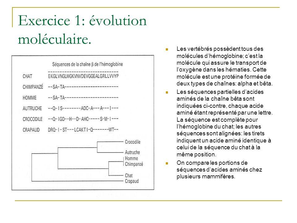 Exercice 1: évolution moléculaire. Les vertébrés possèdent tous des molécules dhémoglobine; cest la molécule qui assure le transport de loxygène dans