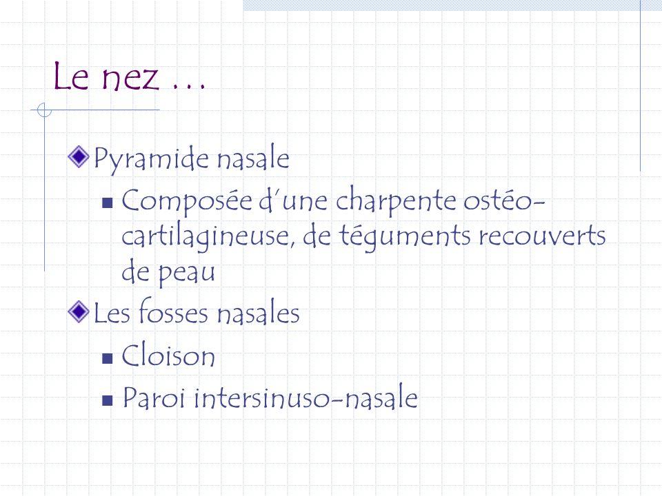Le nez … Pyramide nasale Composée dune charpente ostéo- cartilagineuse, de téguments recouverts de peau Les fosses nasales Cloison Paroi intersinuso-n
