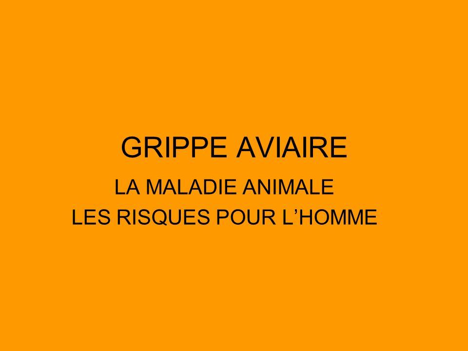 GRIPPE AVIAIRE LA MALADIE ANIMALE LES RISQUES POUR LHOMME