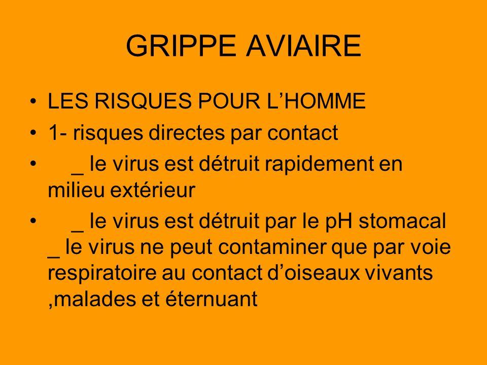 GRIPPE AVIAIRE LES RISQUES POUR LHOMME 1- risques directes par contact _ le virus est détruit rapidement en milieu extérieur _ le virus est détruit pa