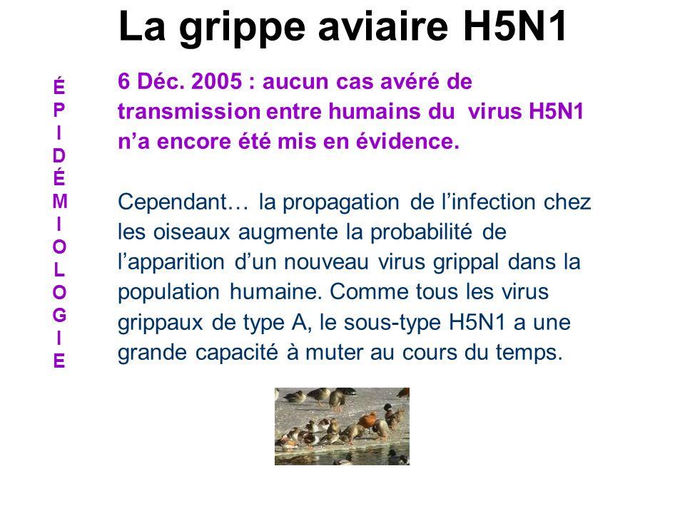 6 Déc. 2005 : aucun cas avéré de transmission entre humains du virus H5N1 na encore été mis en évidence. Cependant… la propagation de linfection chez