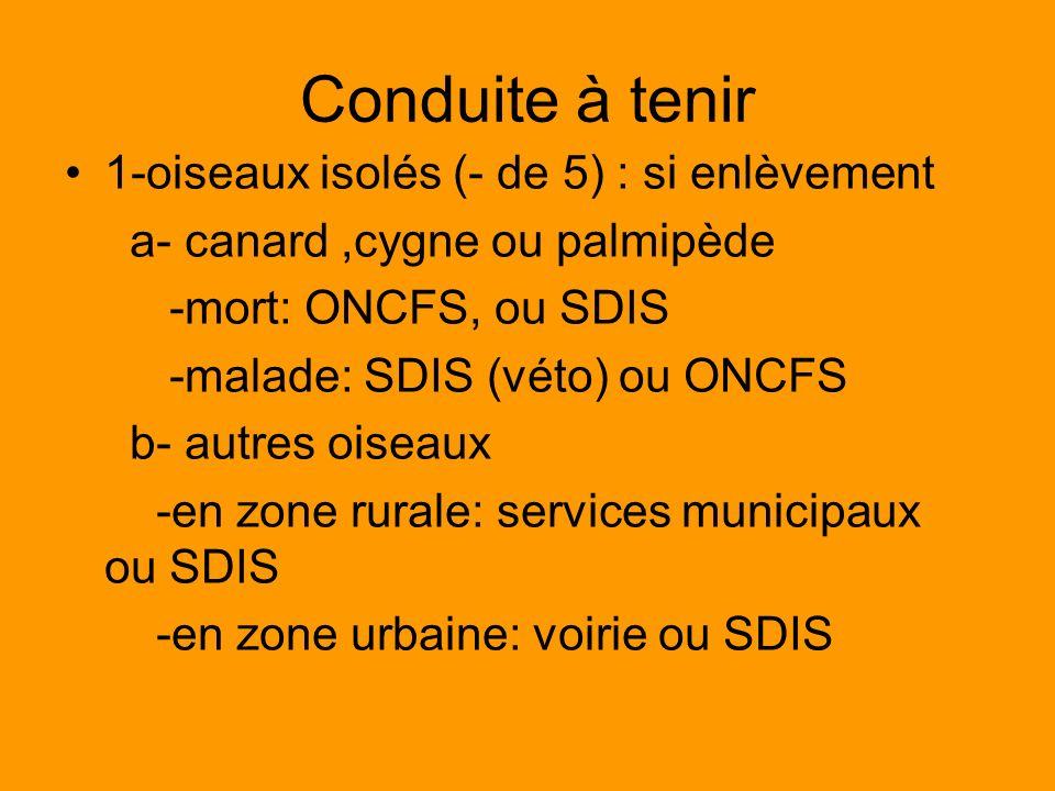 Conduite à tenir 1-oiseaux isolés (- de 5) : si enlèvement a- canard,cygne ou palmipède -mort: ONCFS, ou SDIS -malade: SDIS (véto) ou ONCFS b- autres