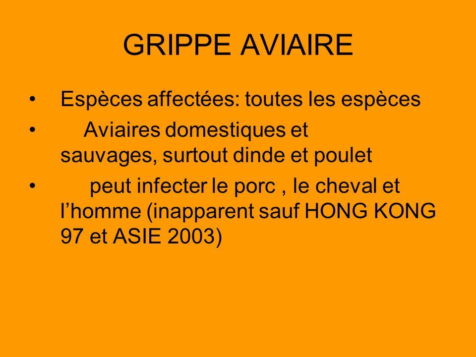 GRIPPE AVIAIRE Espèces affectées: toutes les espèces Aviaires domestiques et sauvages, surtout dinde et poulet peut infecter le porc, le cheval et lho