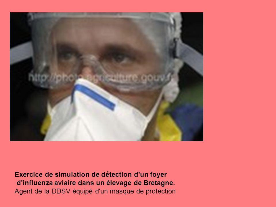 Exercice de simulation de détection d'un foyer d'influenza aviaire dans un élevage de Bretagne. Agent de la DDSV équipé d'un masque de protection