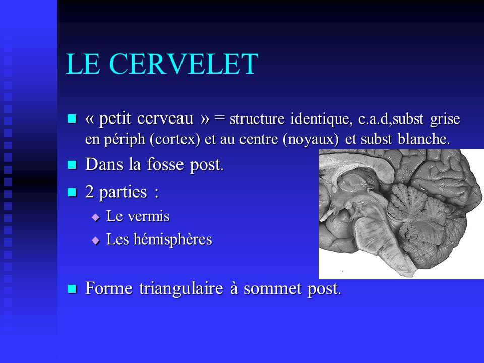 LE CERVELET « petit cerveau » = structure identique, c.a.d,subst grise en périph (cortex) et au centre (noyaux) et subst blanche. « petit cerveau » =