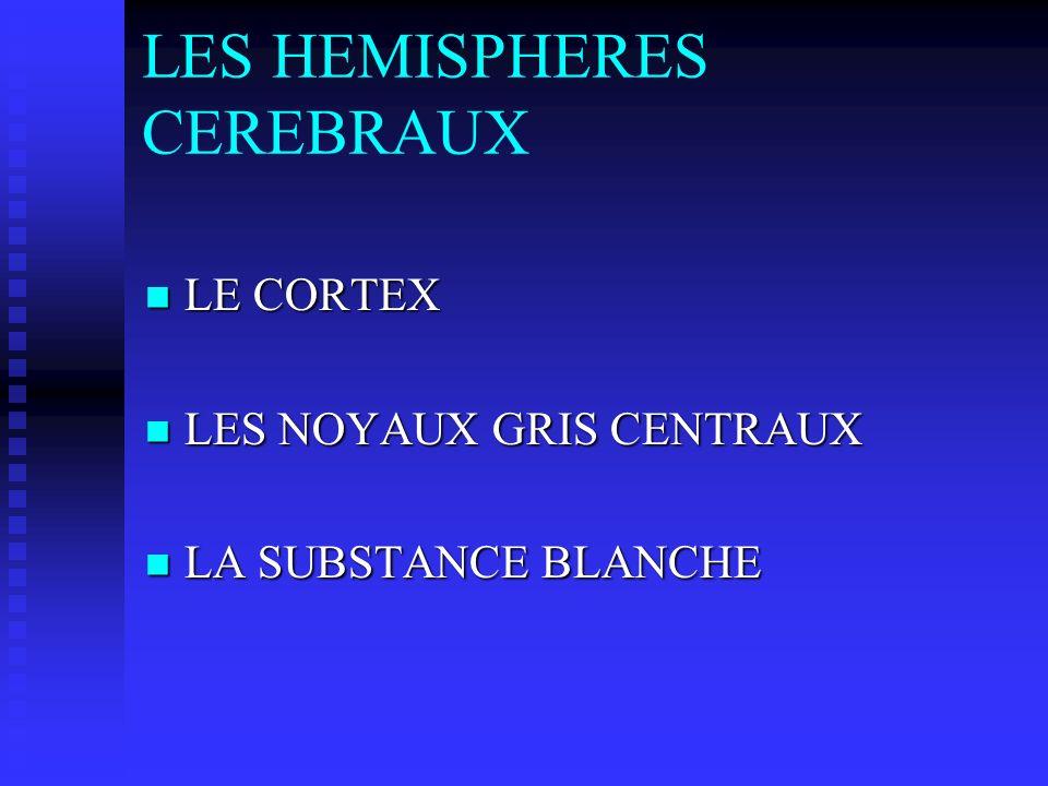 LES HEMISPHERES CEREBRAUX LE CORTEX LE CORTEX LES NOYAUX GRIS CENTRAUX LES NOYAUX GRIS CENTRAUX LA SUBSTANCE BLANCHE LA SUBSTANCE BLANCHE