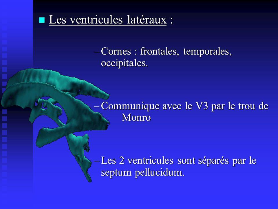 Les ventricules latéraux : Les ventricules latéraux : –Cornes : frontales, temporales, occipitales. –Communique avec le V3 par le trou de Monro –Les 2