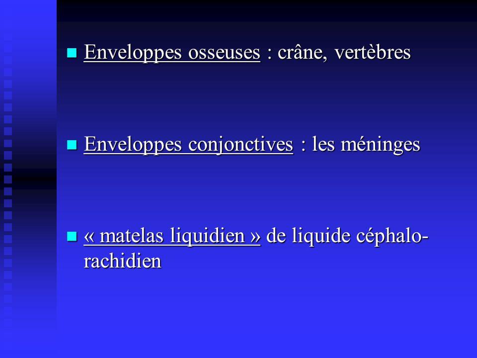 Enveloppes osseuses : crâne, vertèbres Enveloppes osseuses : crâne, vertèbres Enveloppes conjonctives : les méninges Enveloppes conjonctives : les mén