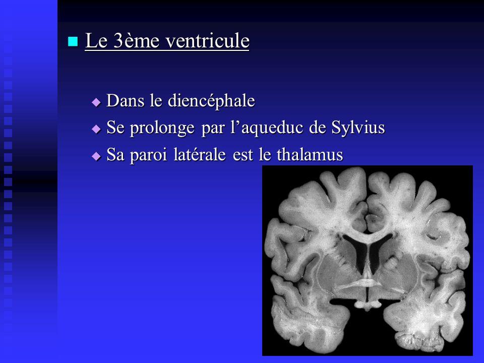 Le 3ème ventricule Le 3ème ventricule Dans le diencéphale Dans le diencéphale Se prolonge par laqueduc de Sylvius Se prolonge par laqueduc de Sylvius
