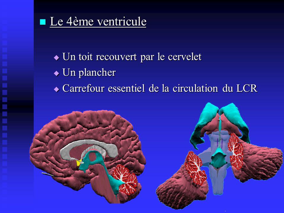 Le 4ème ventricule Le 4ème ventricule Un toit recouvert par le cervelet Un toit recouvert par le cervelet Un plancher Un plancher Carrefour essentiel