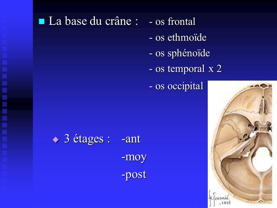 La base du crâne : - os frontal La base du crâne : - os frontal - os ethmoïde - os sphénoïde - os temporal x 2 - os occipital 3 étages :-ant 3 étages