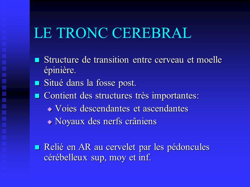 LE TRONC CEREBRAL Structure de transition entre cerveau et moelle épinière. Structure de transition entre cerveau et moelle épinière. Situé dans la fo