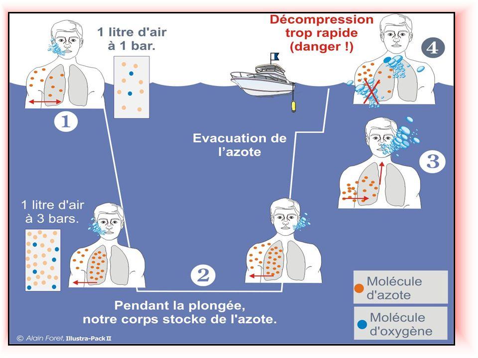 Que se passe til lors de la remontée ??? Lors de la remontée lAzote contenu dans les tissus de notre organisme va vouloir retrouver sa forme gazeuse.