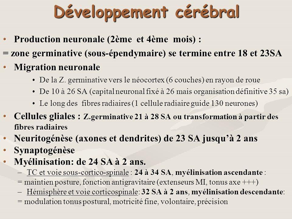 Développement cérébral Production neuronale (2ème et 4ème mois) :Production neuronale (2ème et 4ème mois) : = zone germinative (sous-épendymaire) se t