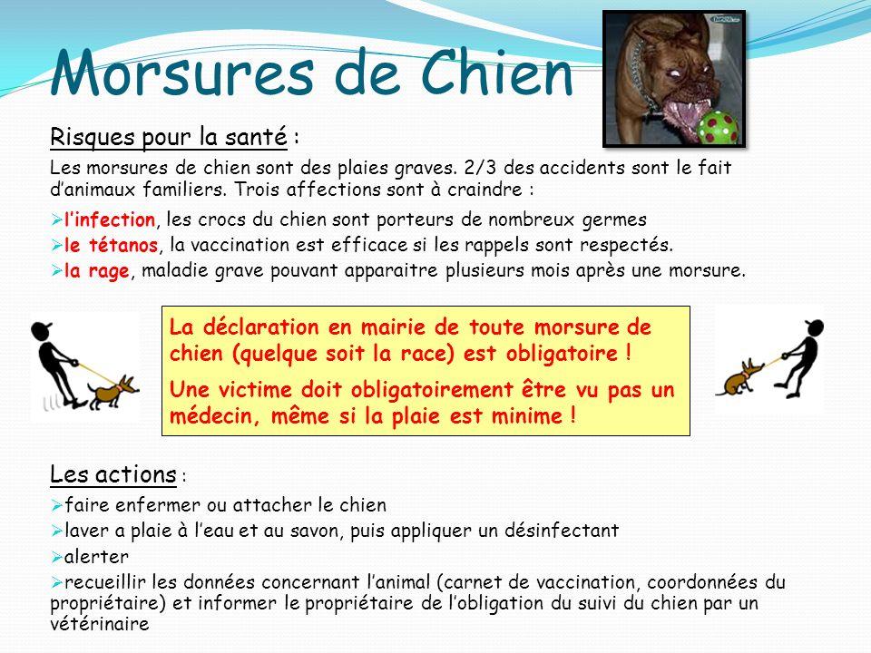 Morsures de Chien Risques pour la santé : Les morsures de chien sont des plaies graves. 2/3 des accidents sont le fait danimaux familiers. Trois affec