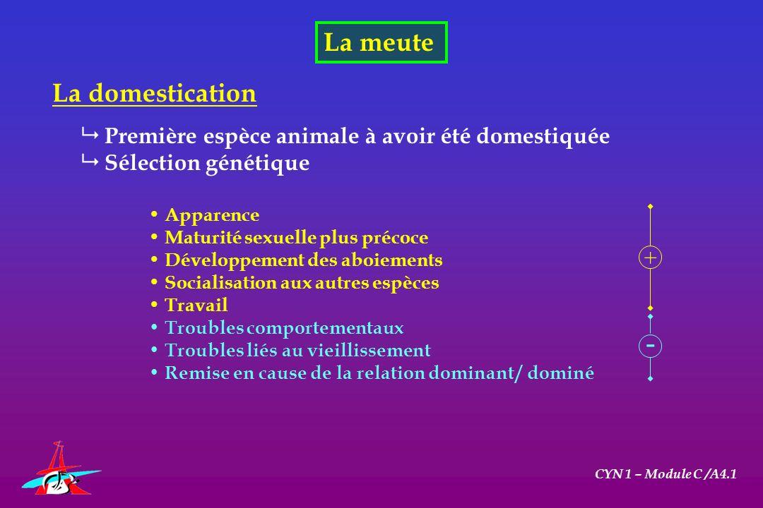 La meute CYN 1 – Module C /A4.1 La domestication Première espèce animale à avoir été domestiquée Sélection génétique Apparence Maturité sexuelle plus