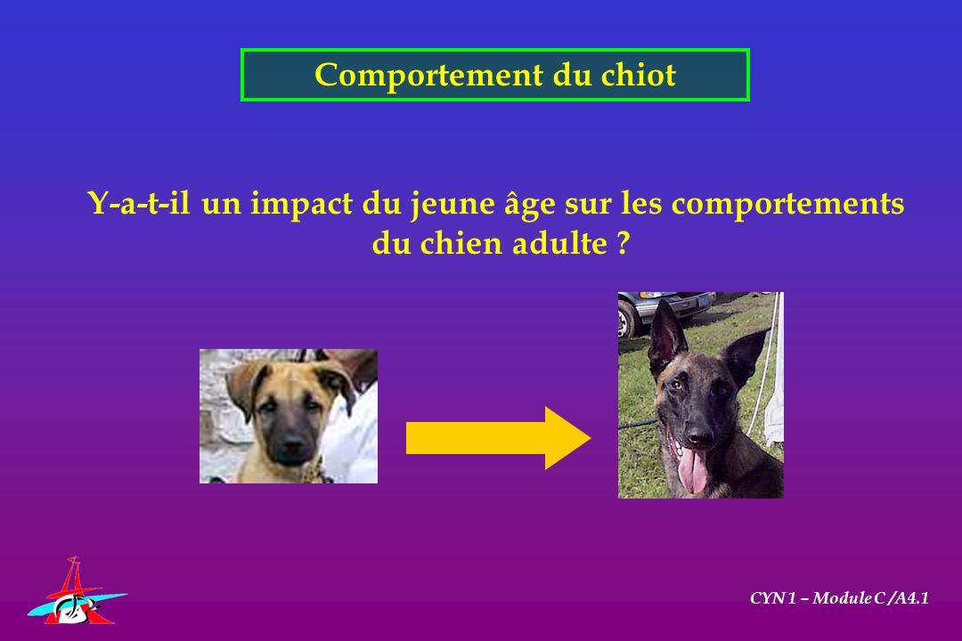 Comportement du chiot CYN 1 – Module C /A4.1 Y-a-t-il un impact du jeune âge sur les comportements du chien adulte ?