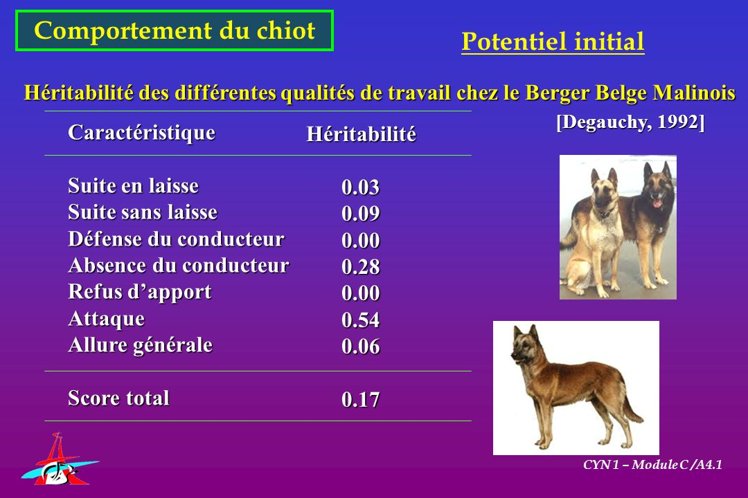Comportement du chiot CYN 1 – Module C /A4.1 Potentiel initial Héritabilité des différentes qualités de travail chez le Berger Belge Malinois Caractér