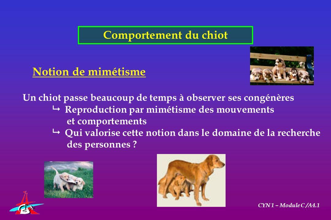 Comportement du chiot CYN 1 – Module C /A4.1 Notion de mimétisme Un chiot passe beaucoup de temps à observer ses congénères Reproduction par mimétisme