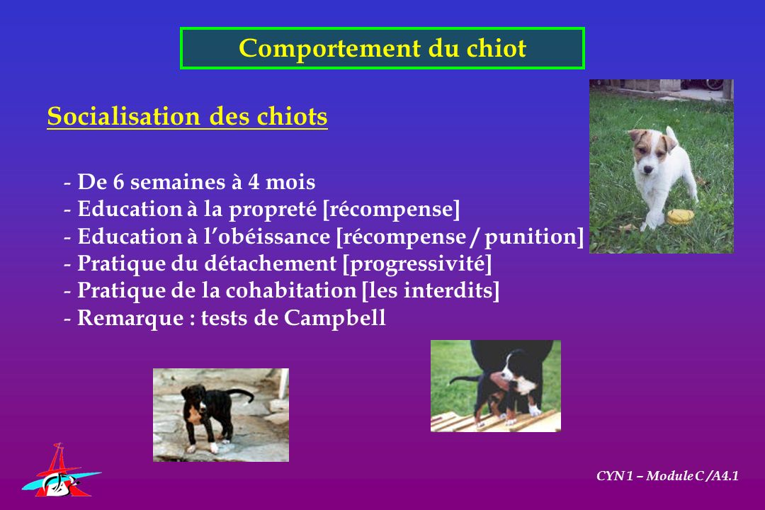 Comportement du chiot CYN 1 – Module C /A4.1 Socialisation des chiots - De 6 semaines à 4 mois - Education à la propreté [récompense] - Education à lo