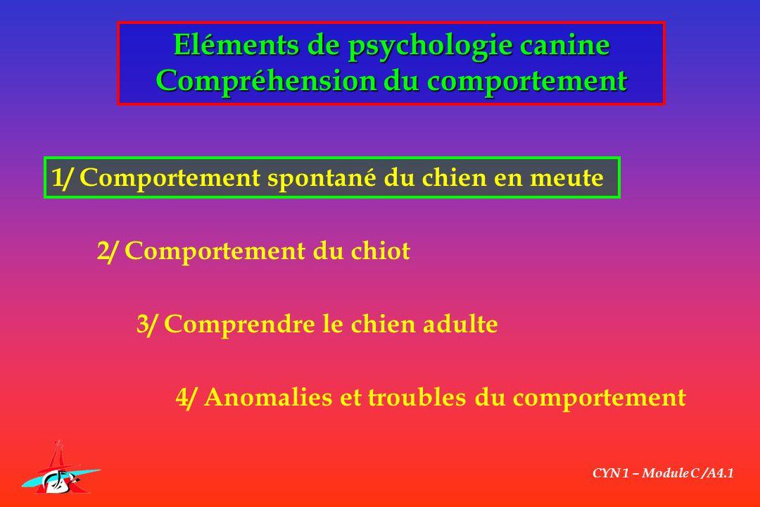 CYN 1 – Module C /A4.1 Comprendre le chien adulte Les comportements normaux du chien Comportement alimentaire - Respect de lindividu (lieu, heur, gamelle, aliment) - Prise en compte de lopérationnalité du chien de recherche fractionnement des repas .