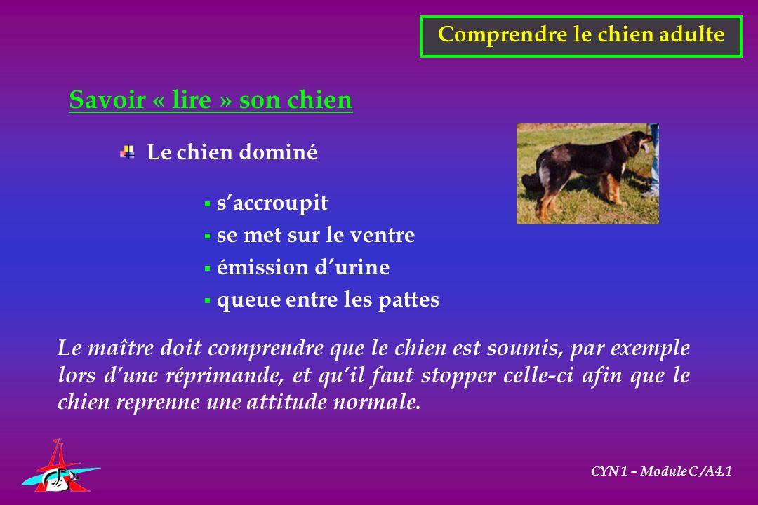 CYN 1 – Module C /A4.1 Savoir « lire » son chien Comprendre le chien adulte Le chien dominé saccroupit se met sur le ventre émission durine queue entr