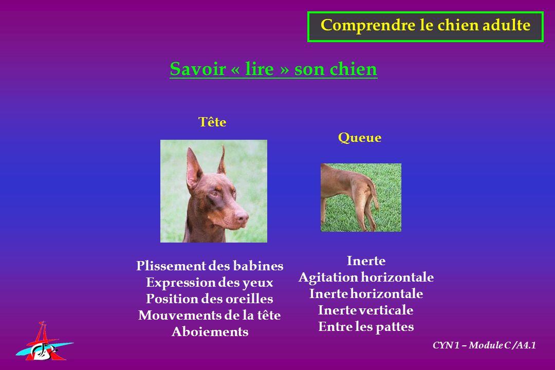 CYN 1 – Module C /A4.1 Savoir « lire » son chien Comprendre le chien adulte Plissement des babines Expression des yeux Position des oreilles Mouvement