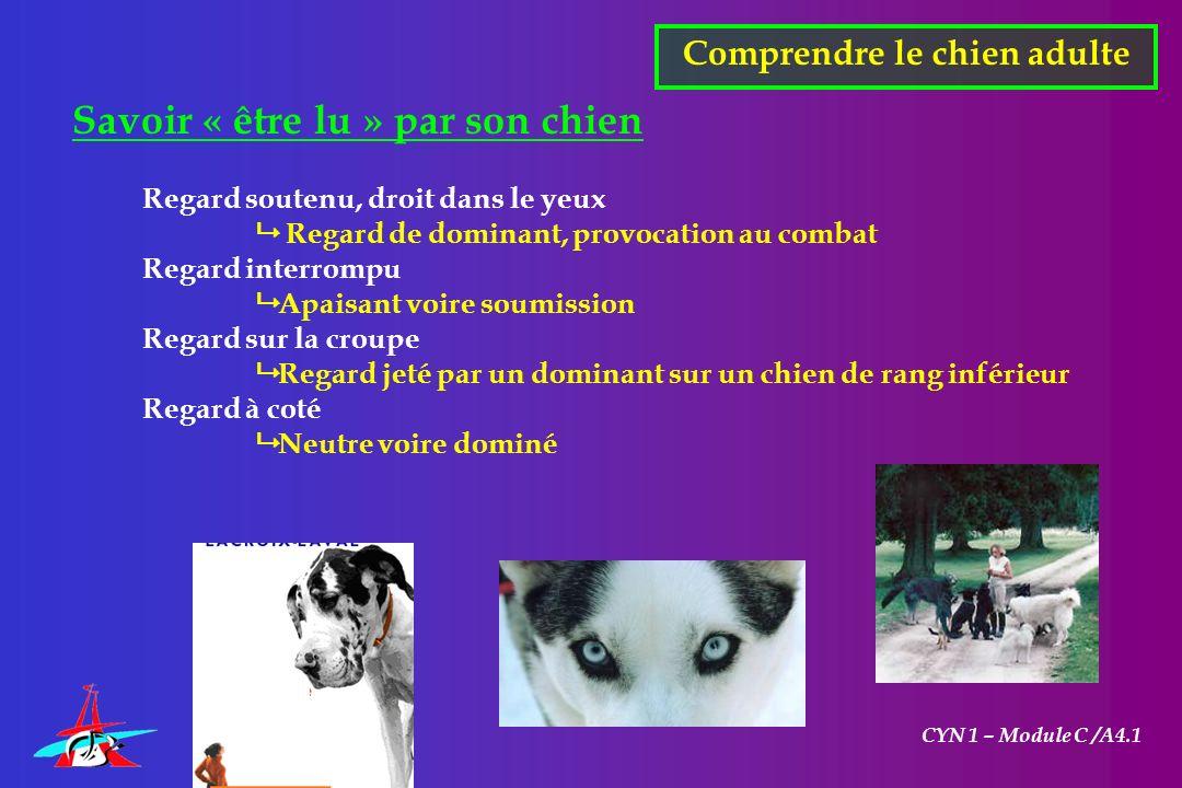 CYN 1 – Module C /A4.1 Savoir « être lu » par son chien Regard soutenu, droit dans le yeux Regard de dominant, provocation au combat Regard interrompu